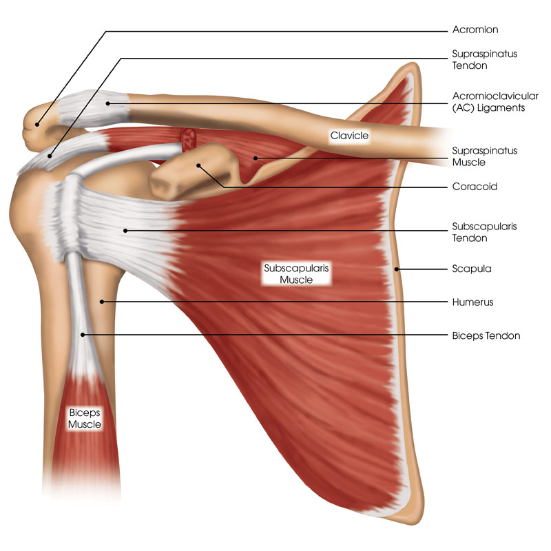 Shoulder Surgeon Chicago IL | Dr. Steven Chudik